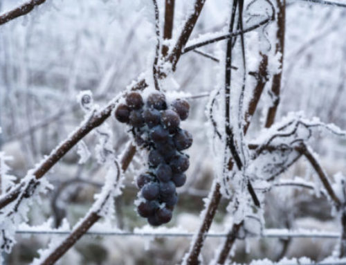 Gelukkig, het heeft gevroren!